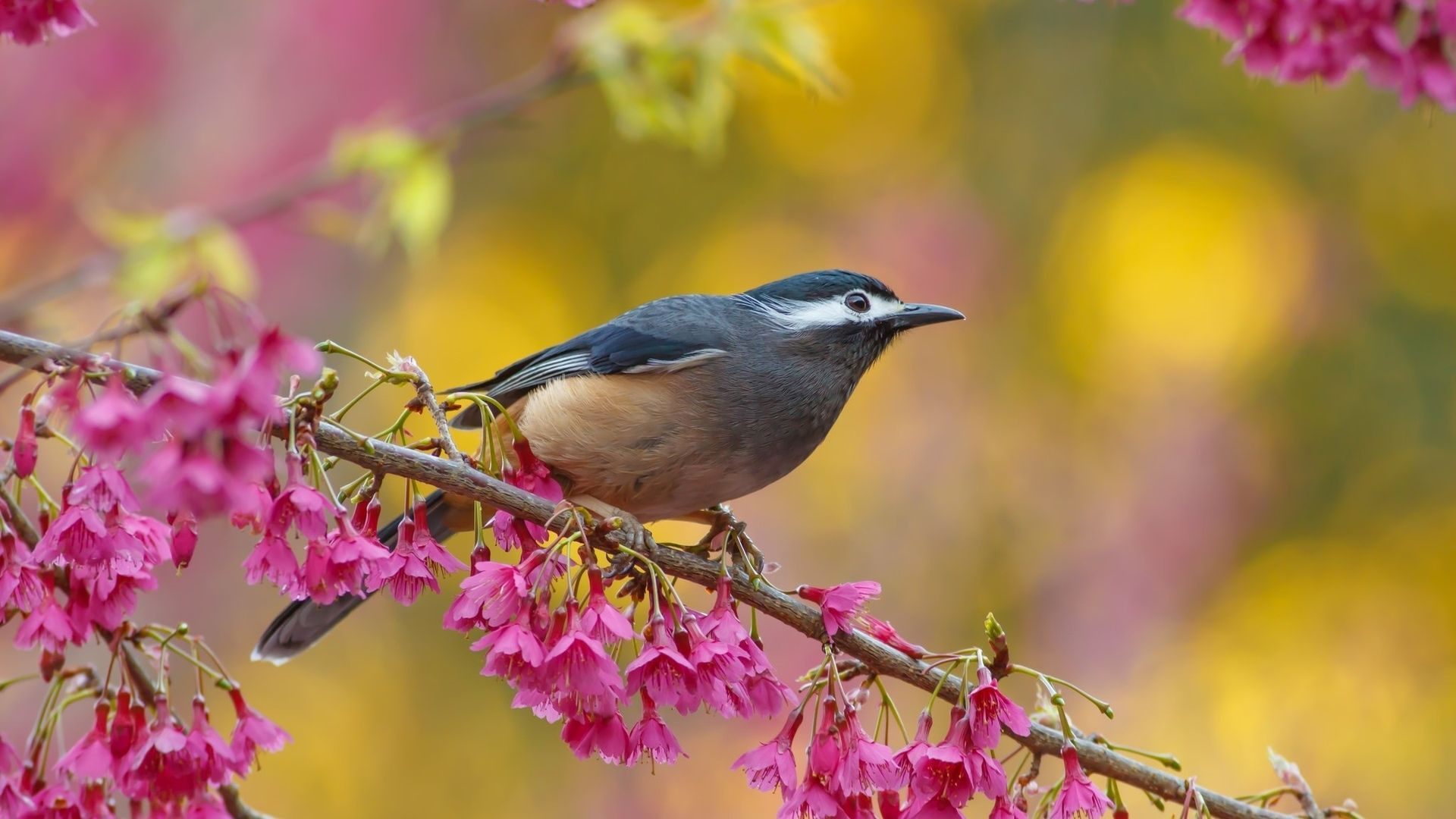 Birds And Trees download free wallpapers for pc in hd