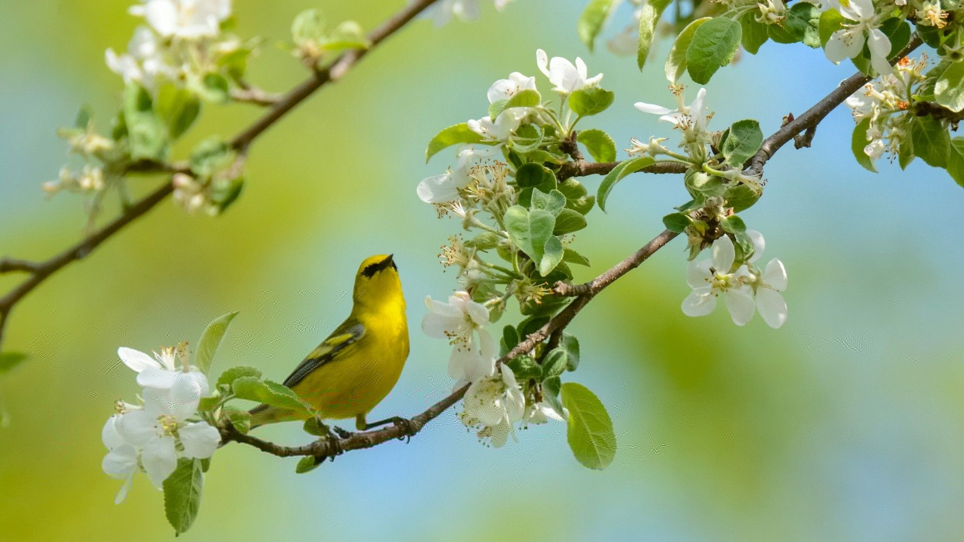 Birds And Trees download wallpaper image