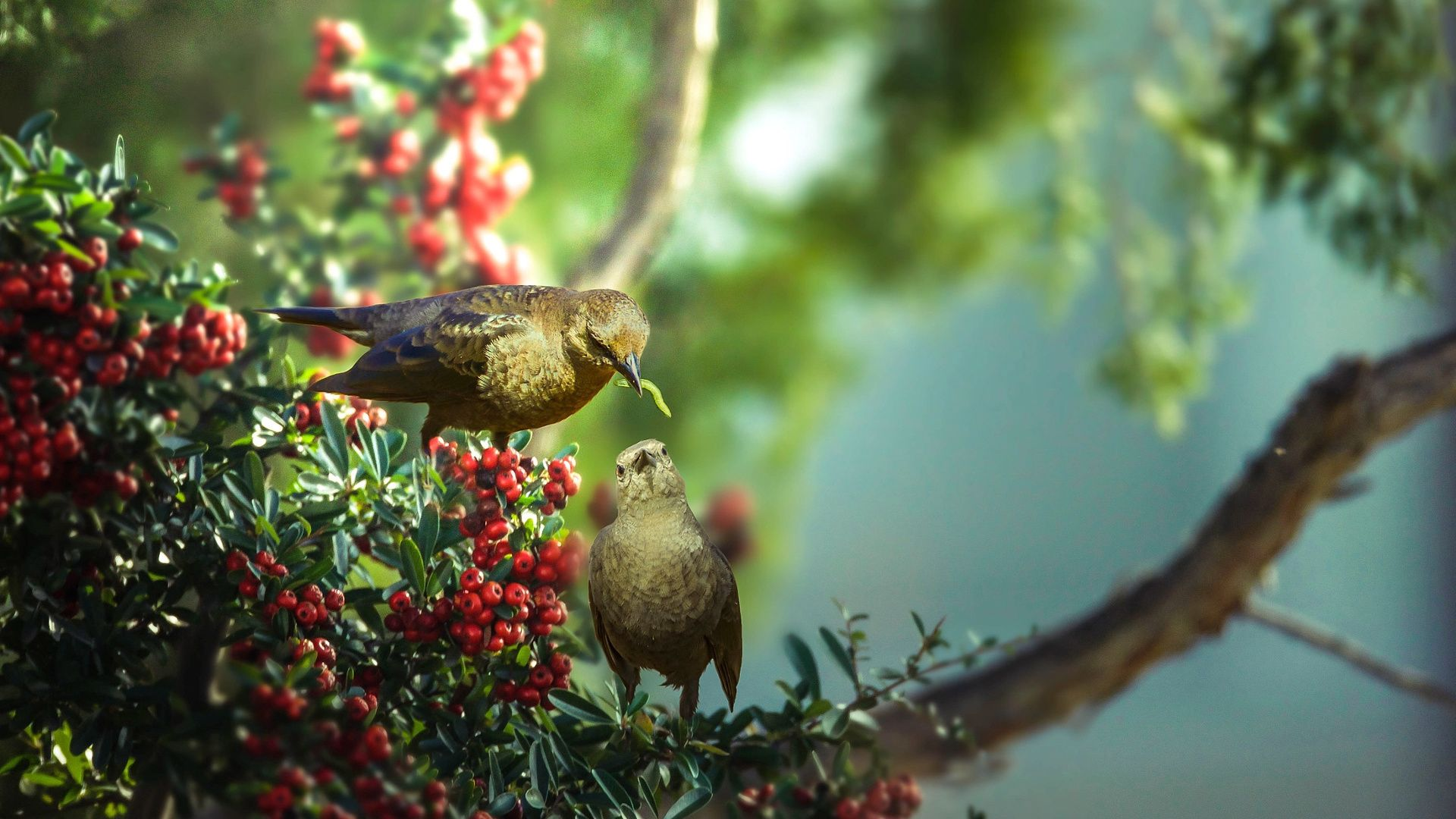 Birds And Trees free download wallpaper