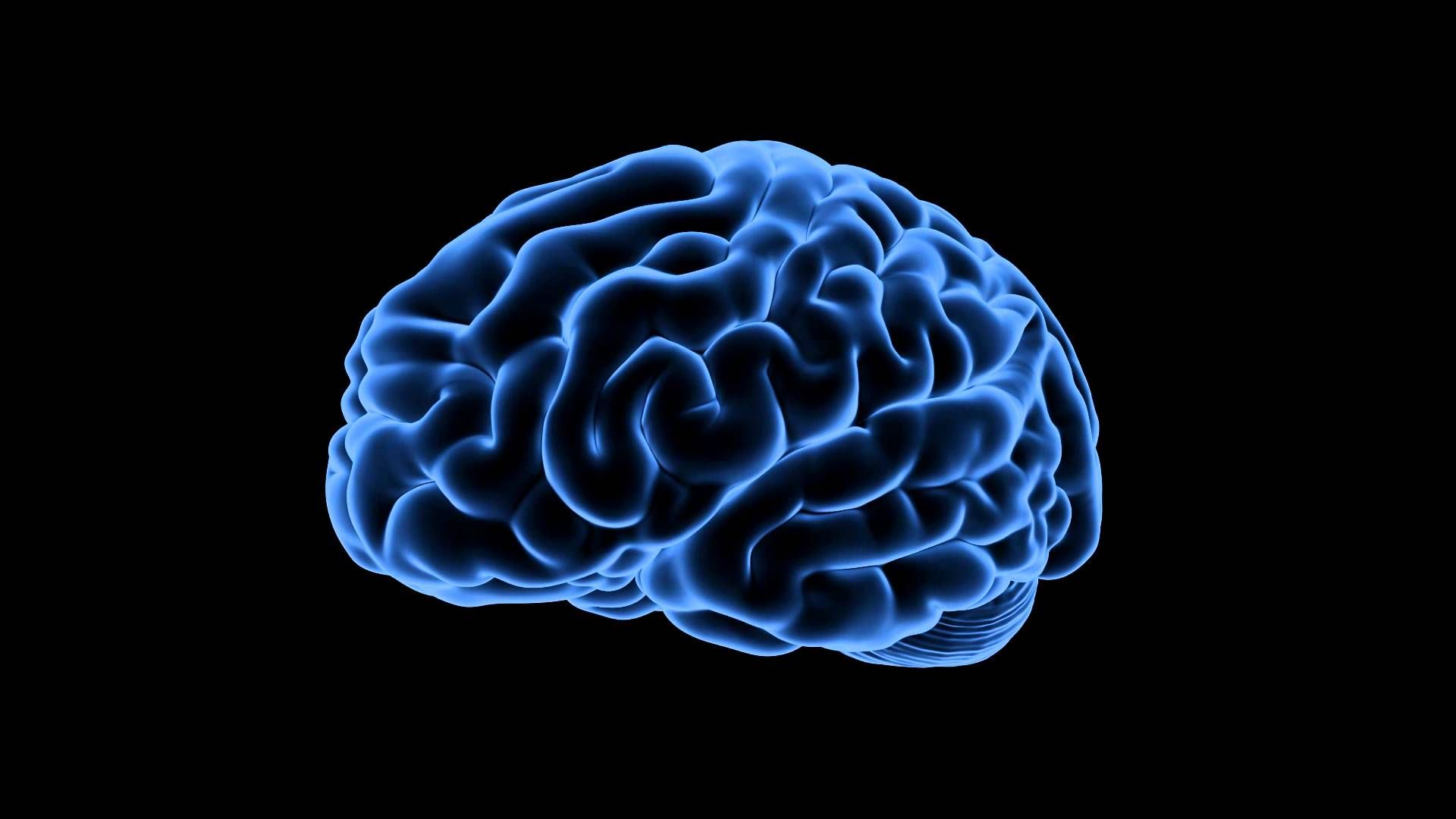 Brain HD 1080 wallpaper
