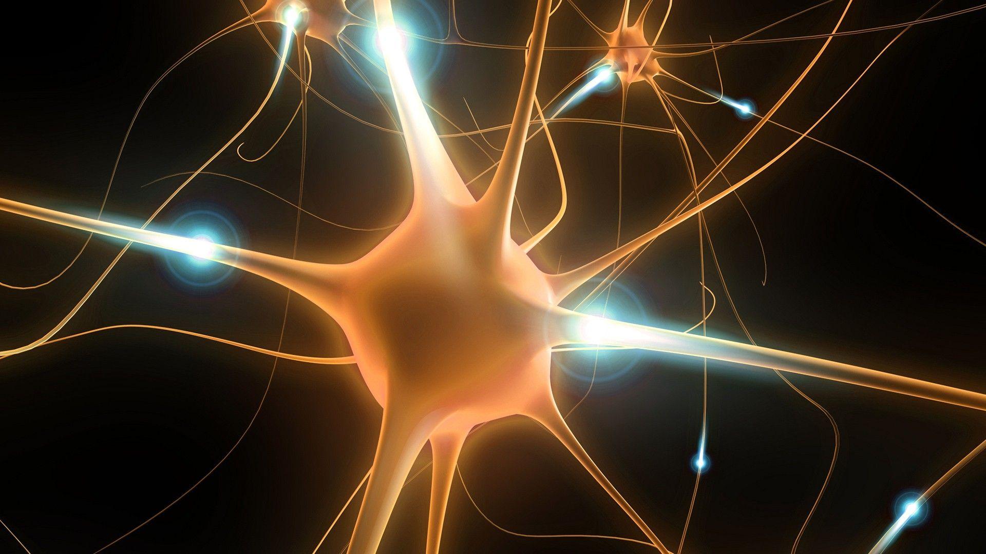 Brain download wallpaper image