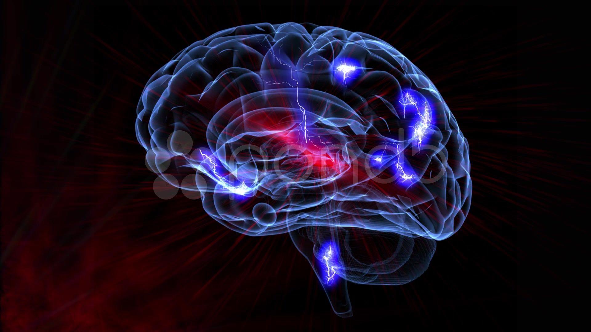 Brain download free wallpaper image search