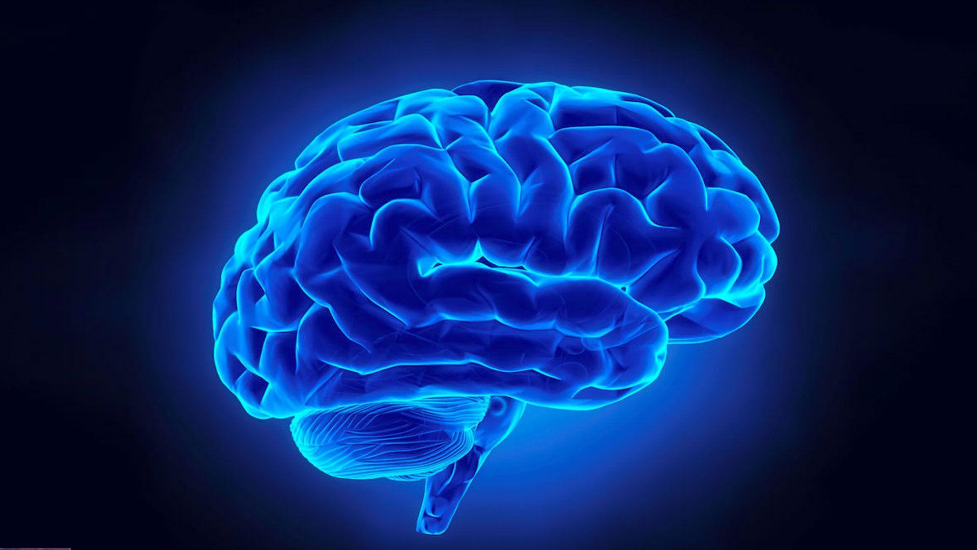 Brain HD Download
