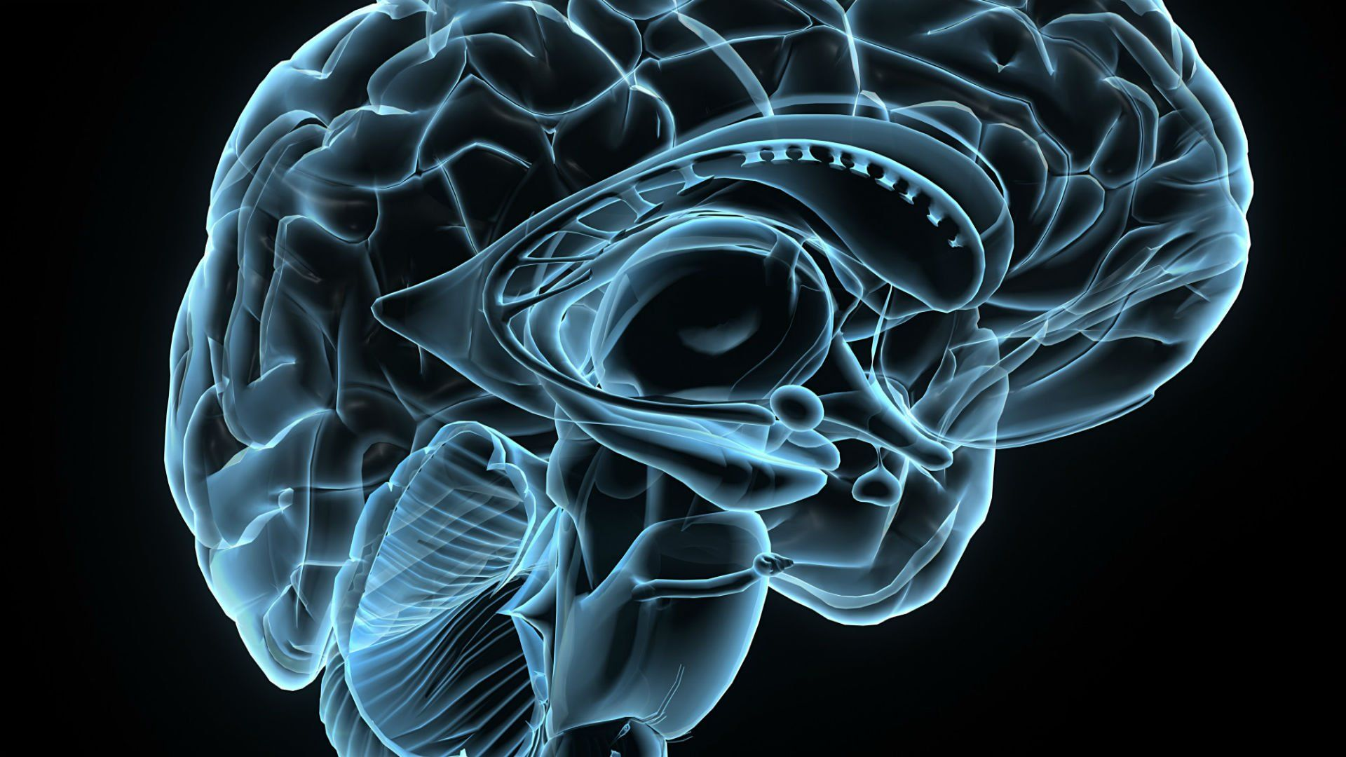 Brain Wallpaper and Background