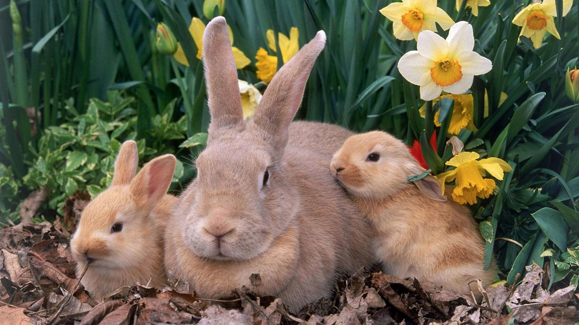 Bunny Nice Wallpaper