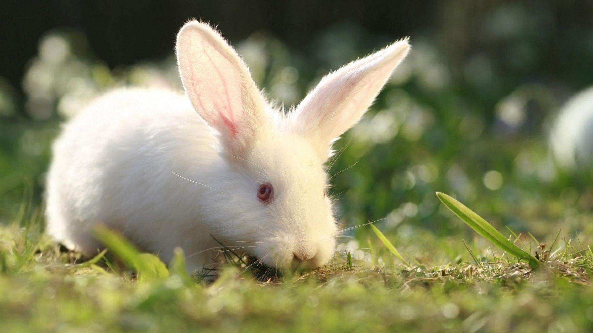 Bunny wallpaper image hd