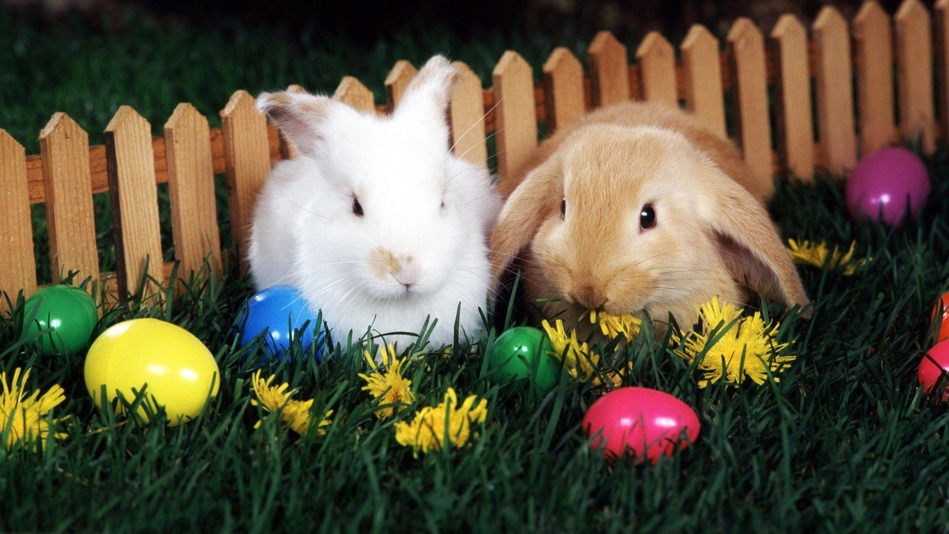 Bunny wallpaper photo full hd