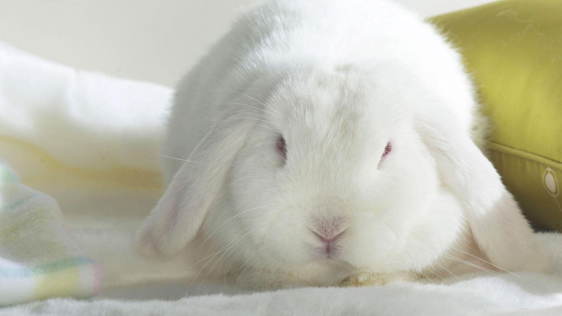 Bunny download nice wallpaper