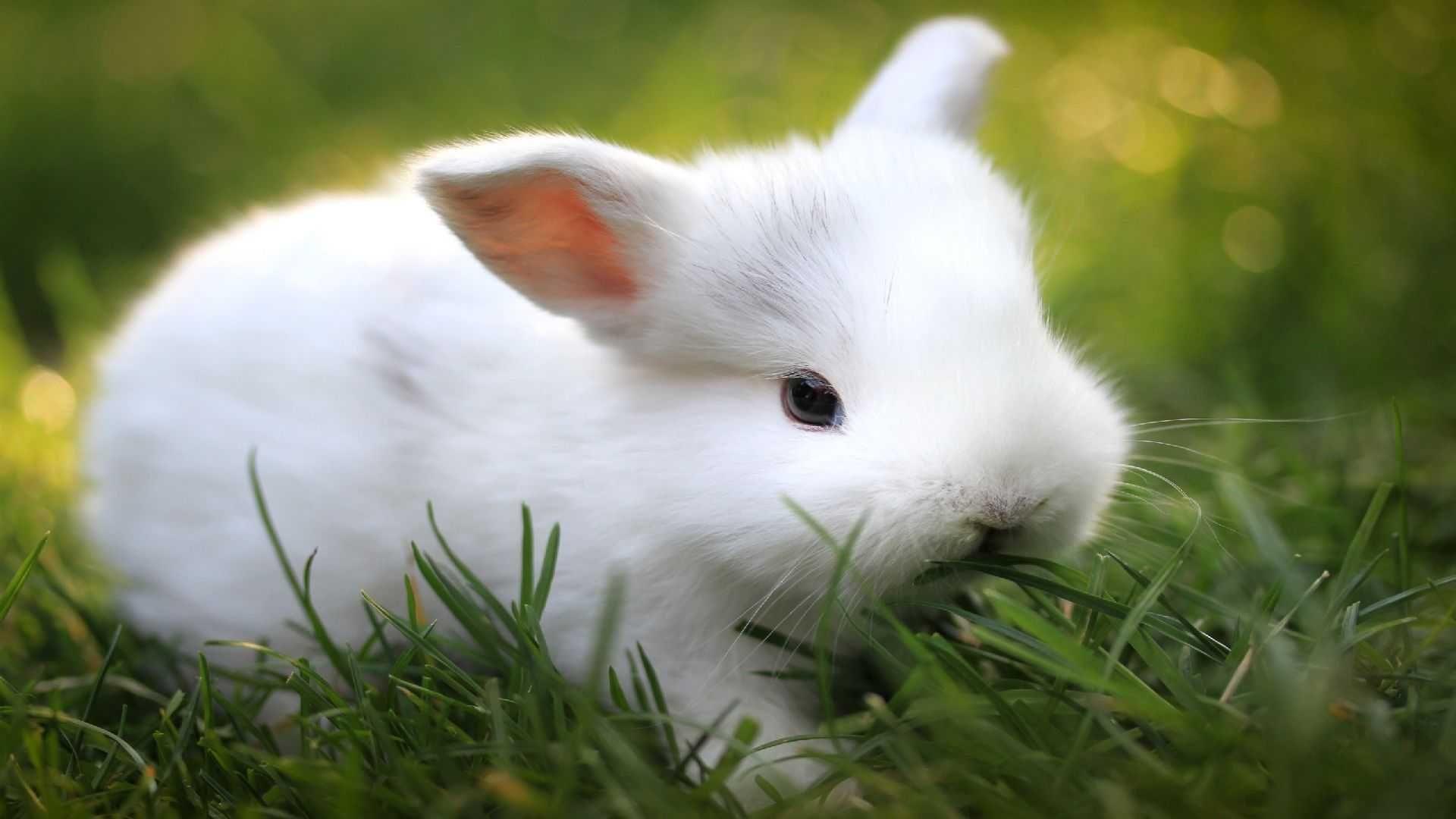 Bunny good wallpaper hd
