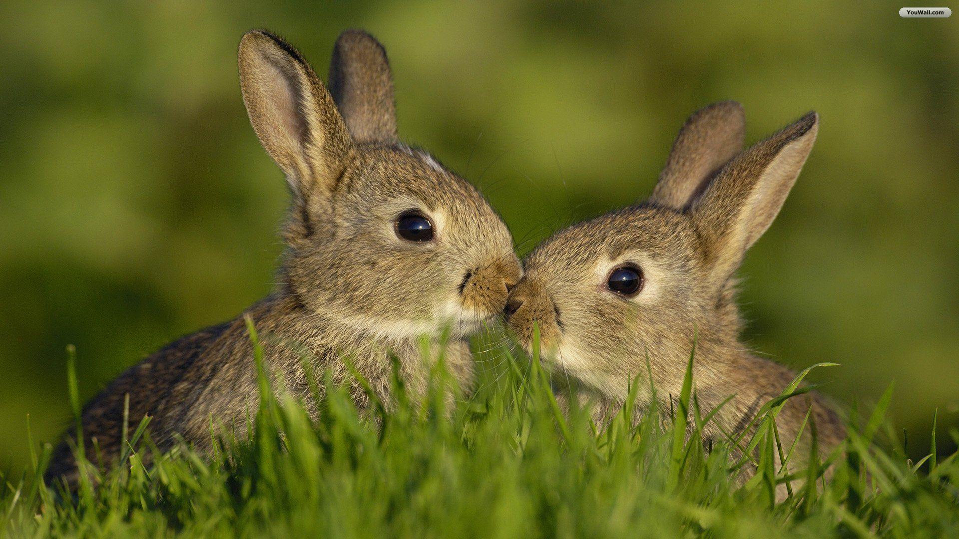 Bunny screen wallpaper