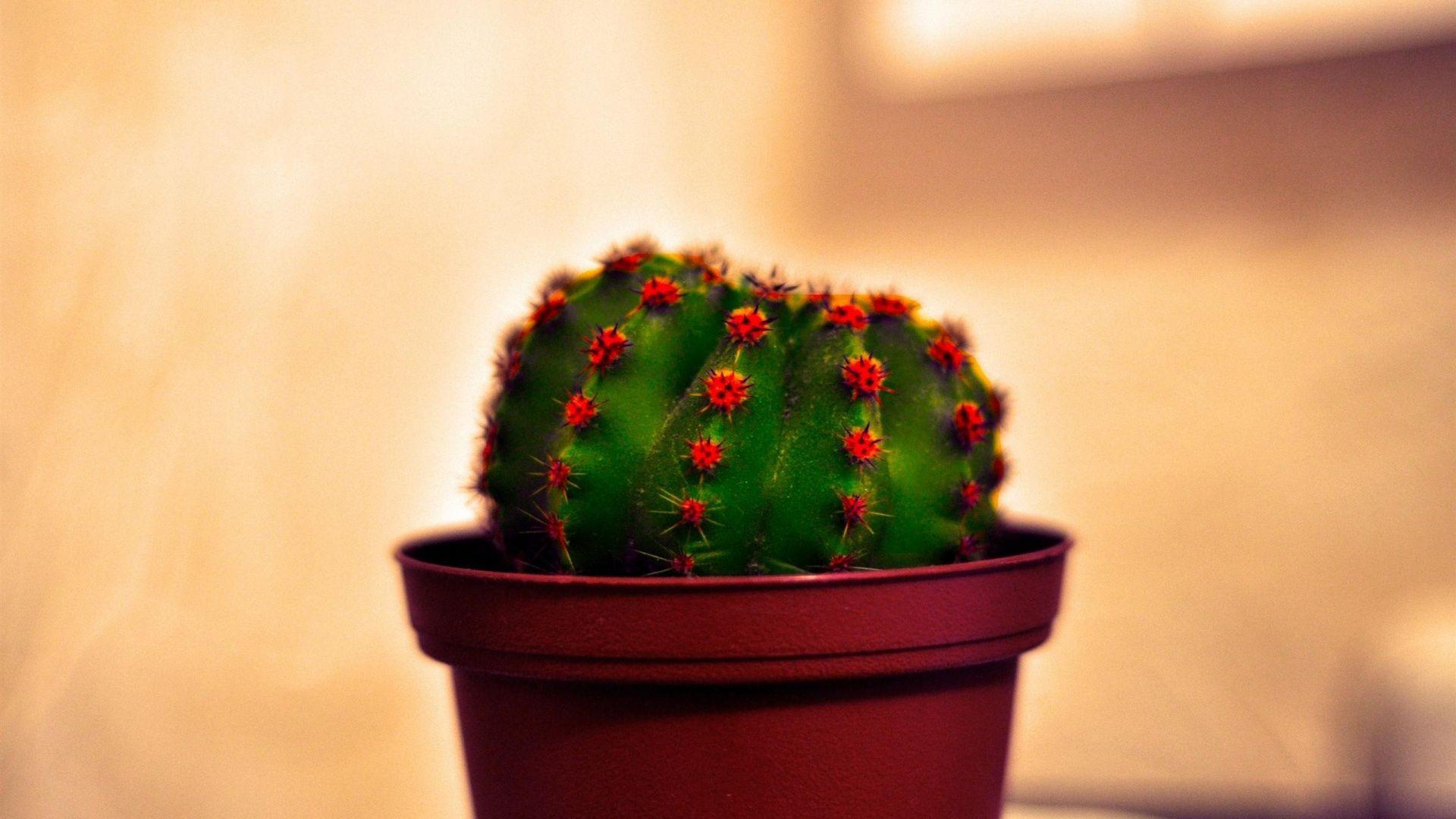Cactus full wallpaper