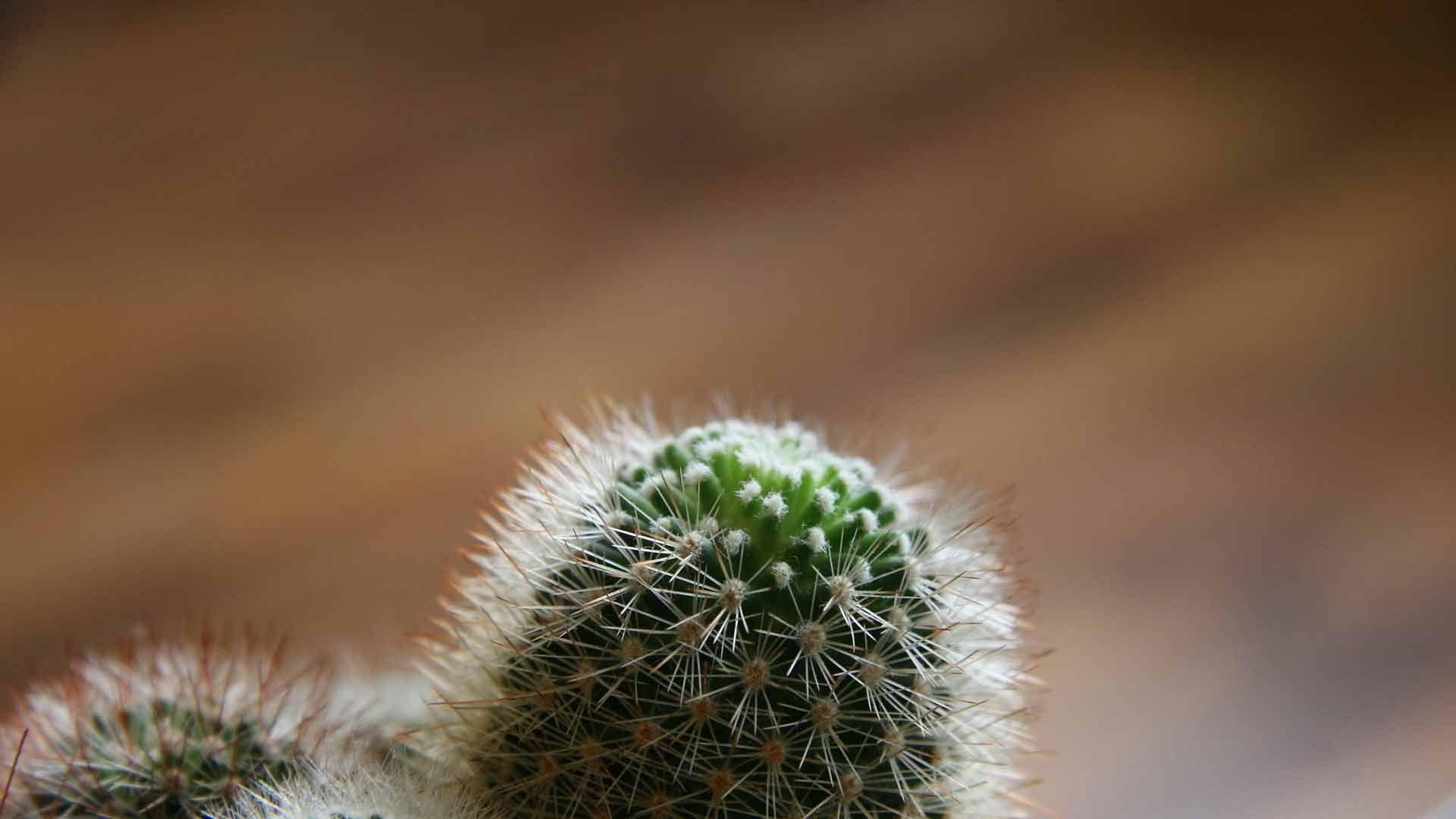 Cactus wallpaper picture hd
