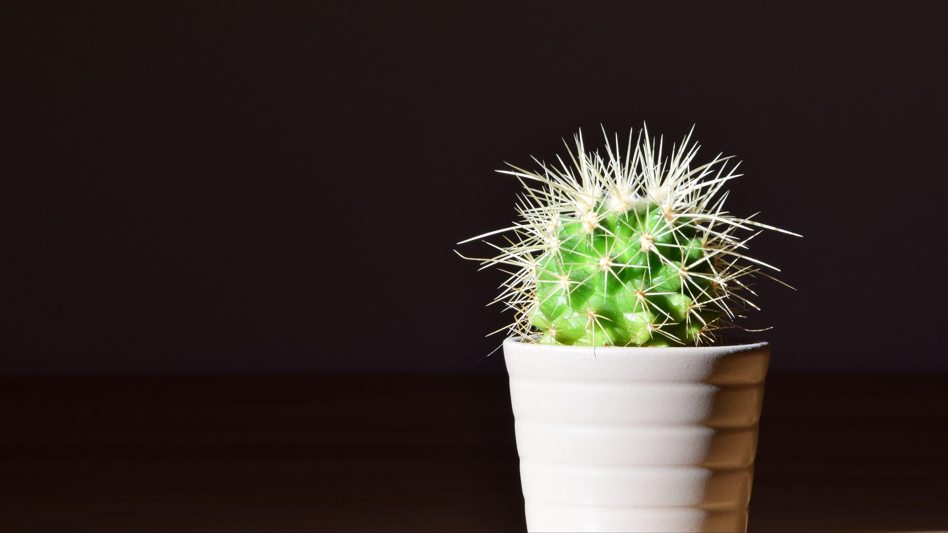 Cactus best Wallpaper