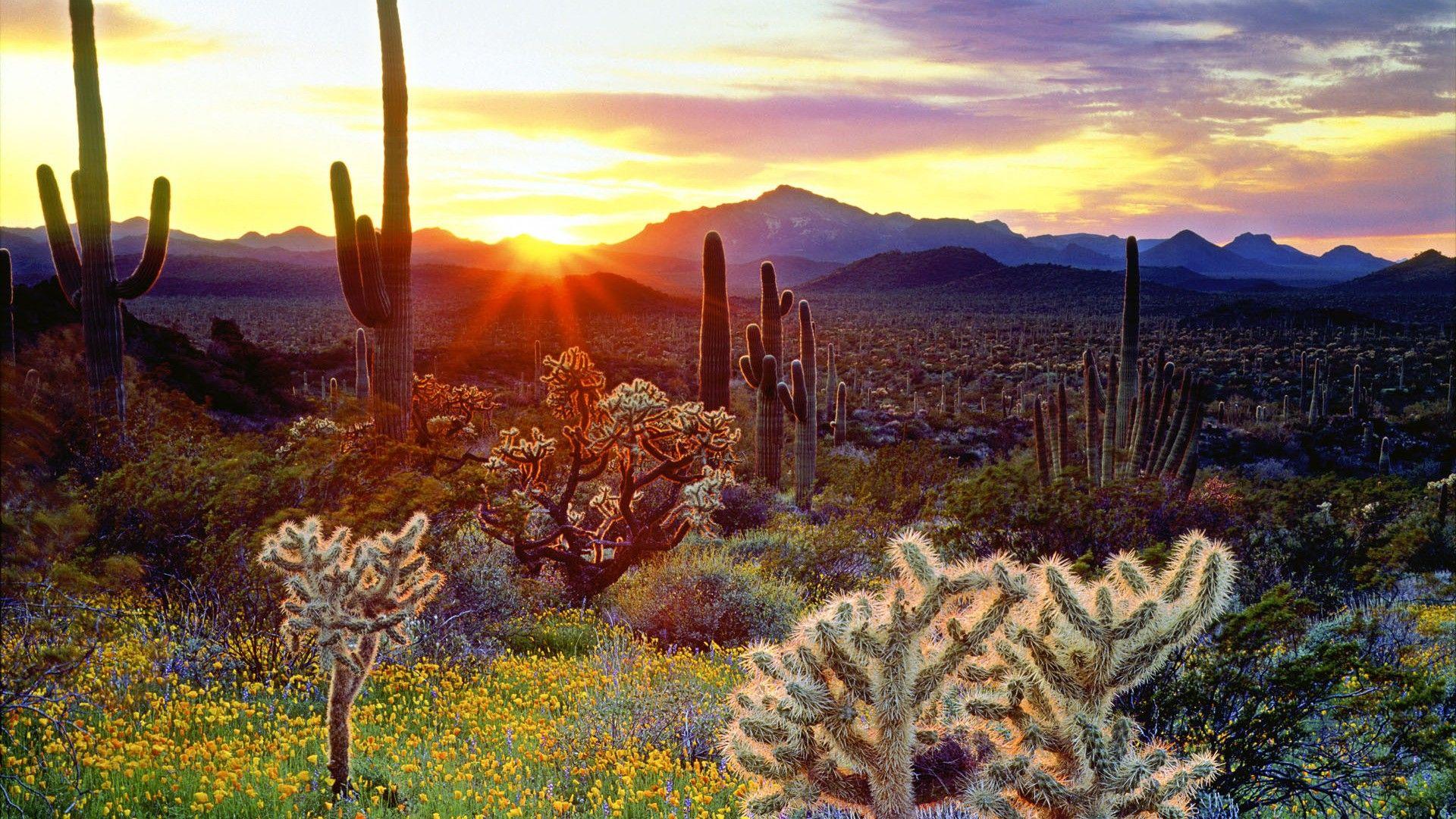 Cactus screen wallpaper