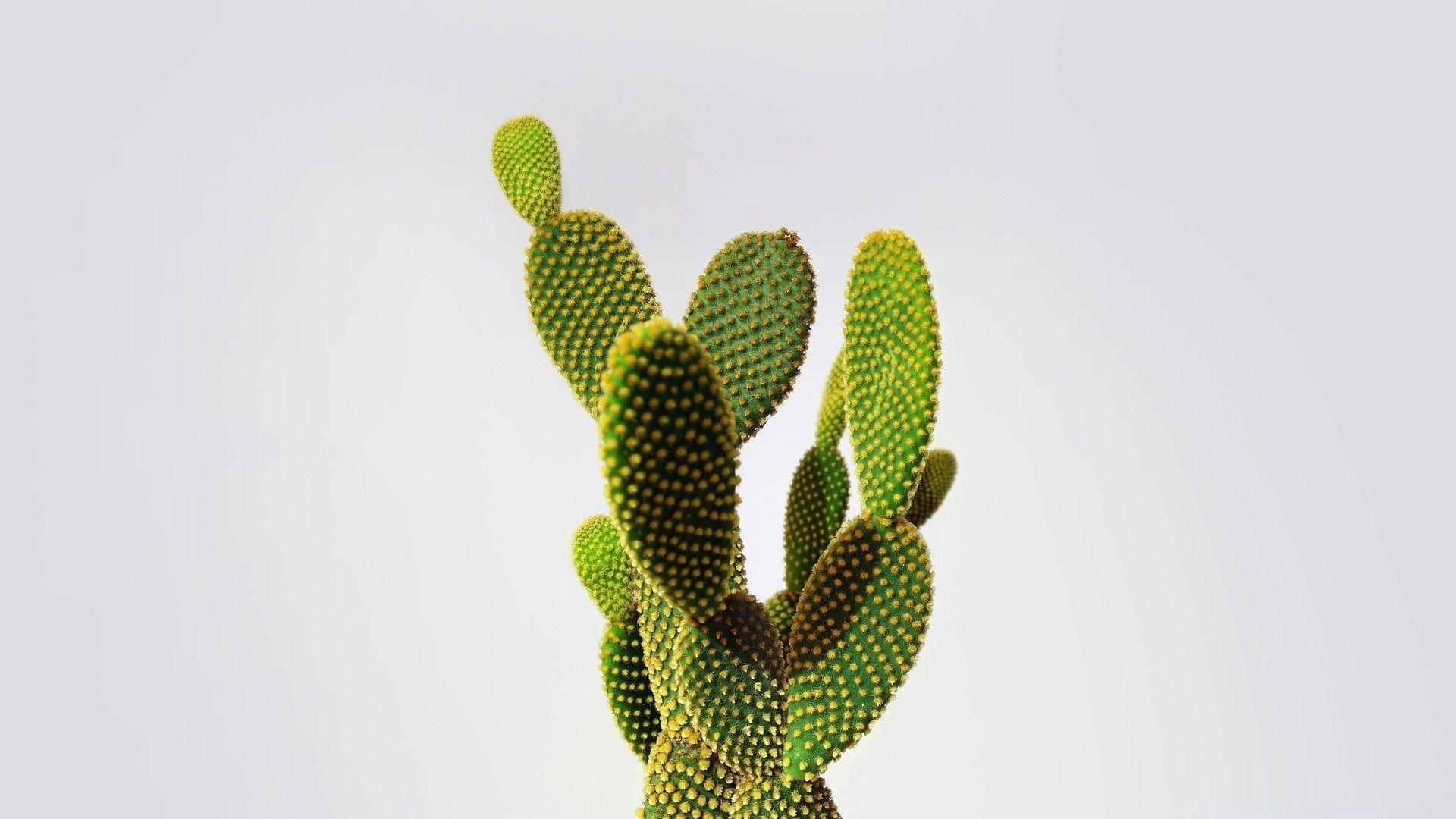 Cactus Picture