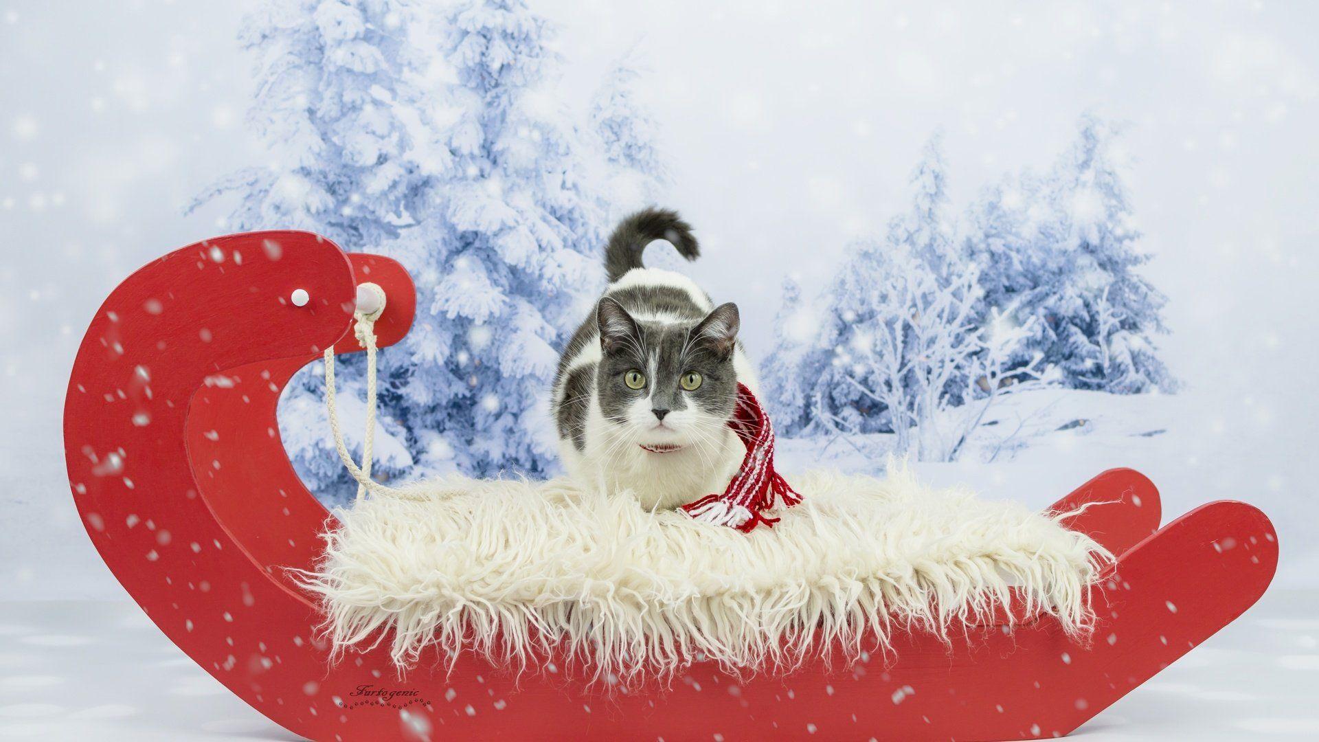 Christmas Sleigh 1920x1080 wallpaper
