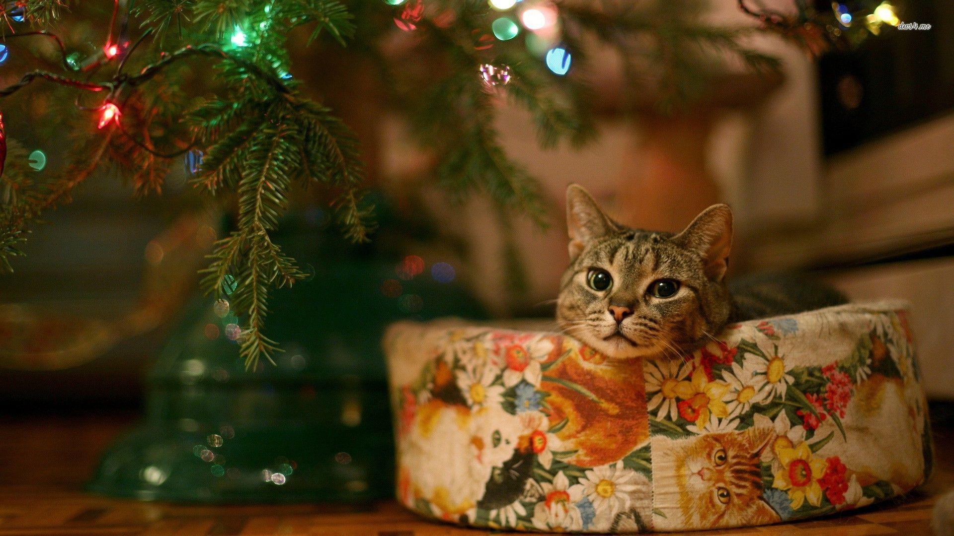 Christmas Tree Background Wallpaper