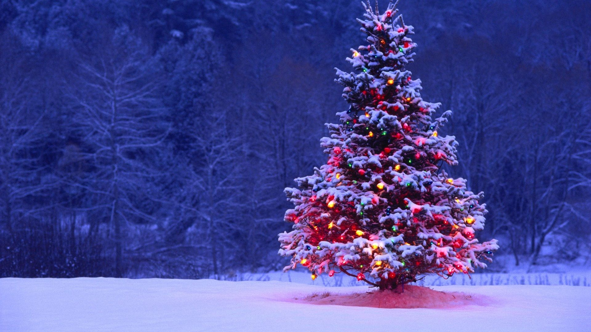 Christmas Tree good wallpaper hd