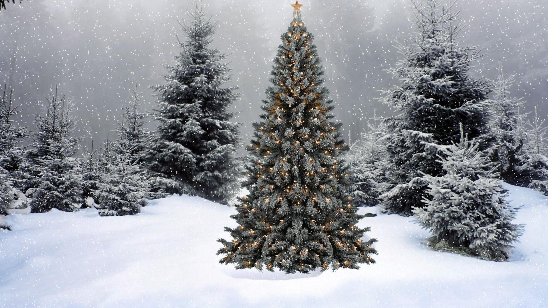 Christmas Tree download wallpaper image