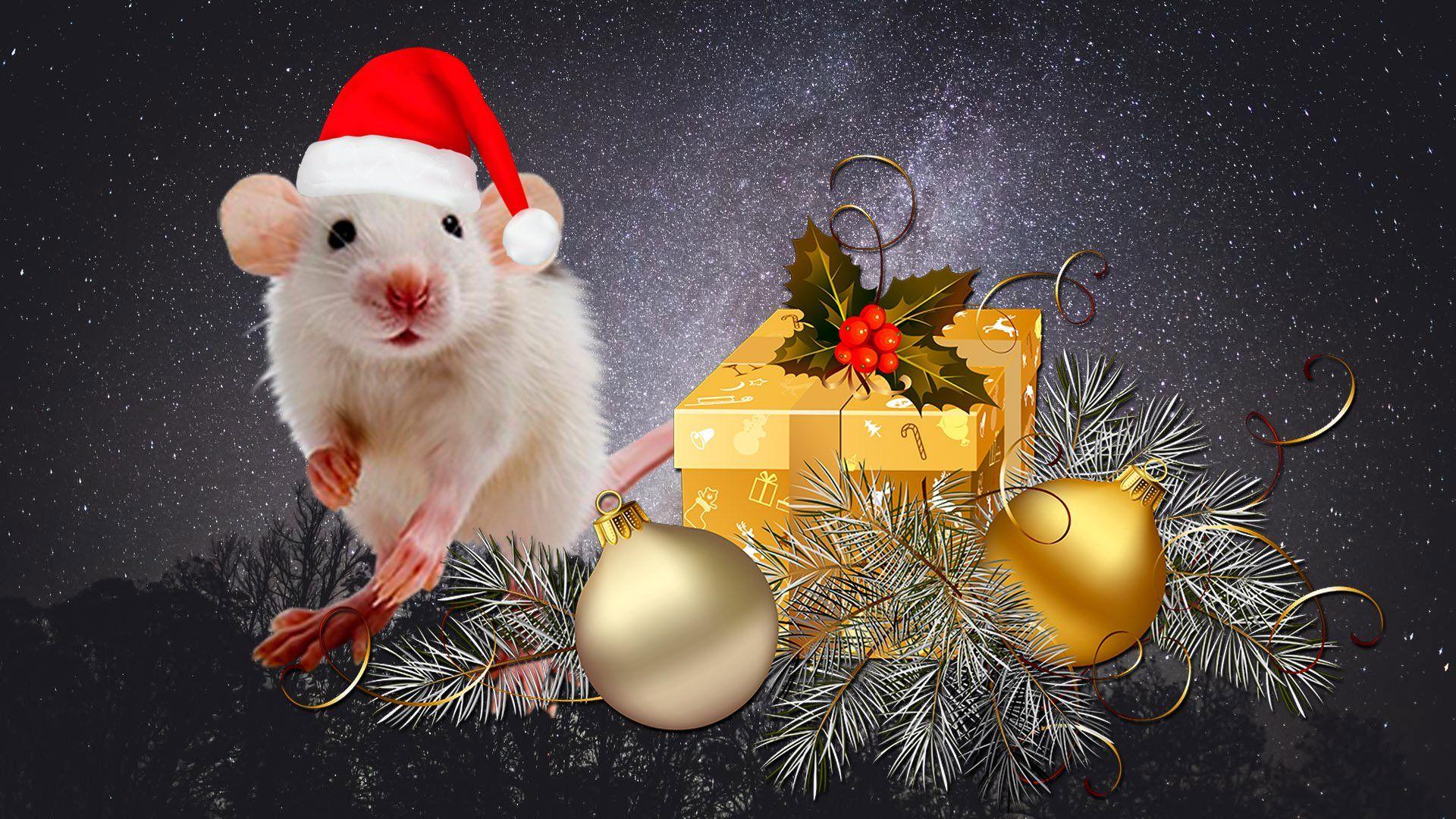 Christmas White Rat Cool Wallpaper