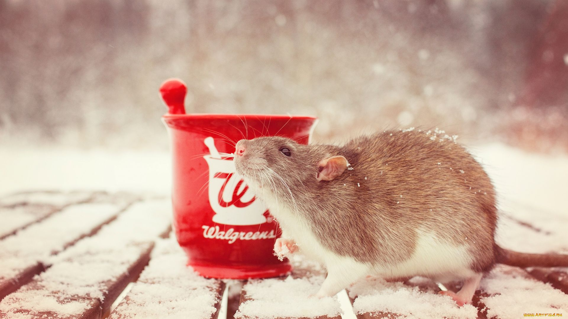 Christmas White Rat wallpaper and themes