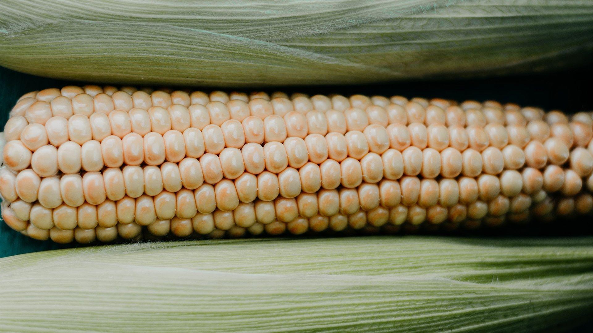Corn 1920x1080 wallpaper