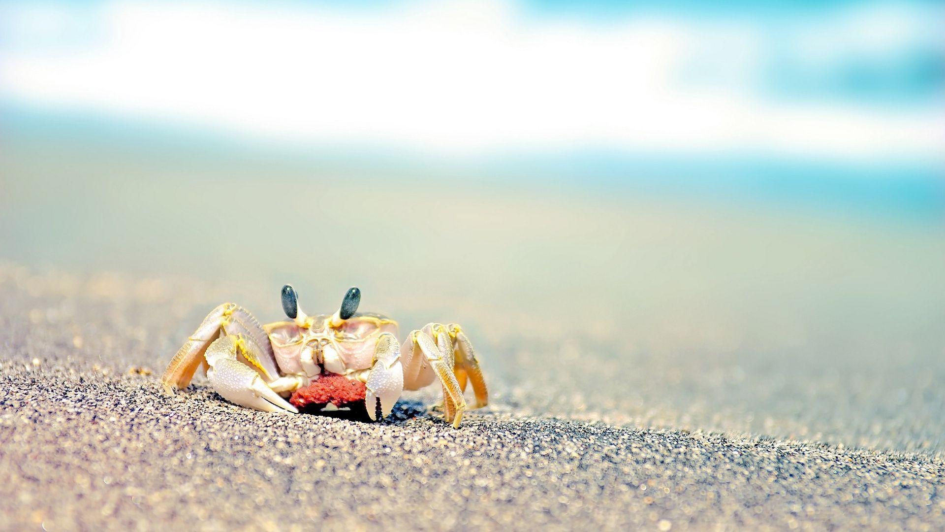 Crab wallpaper photo