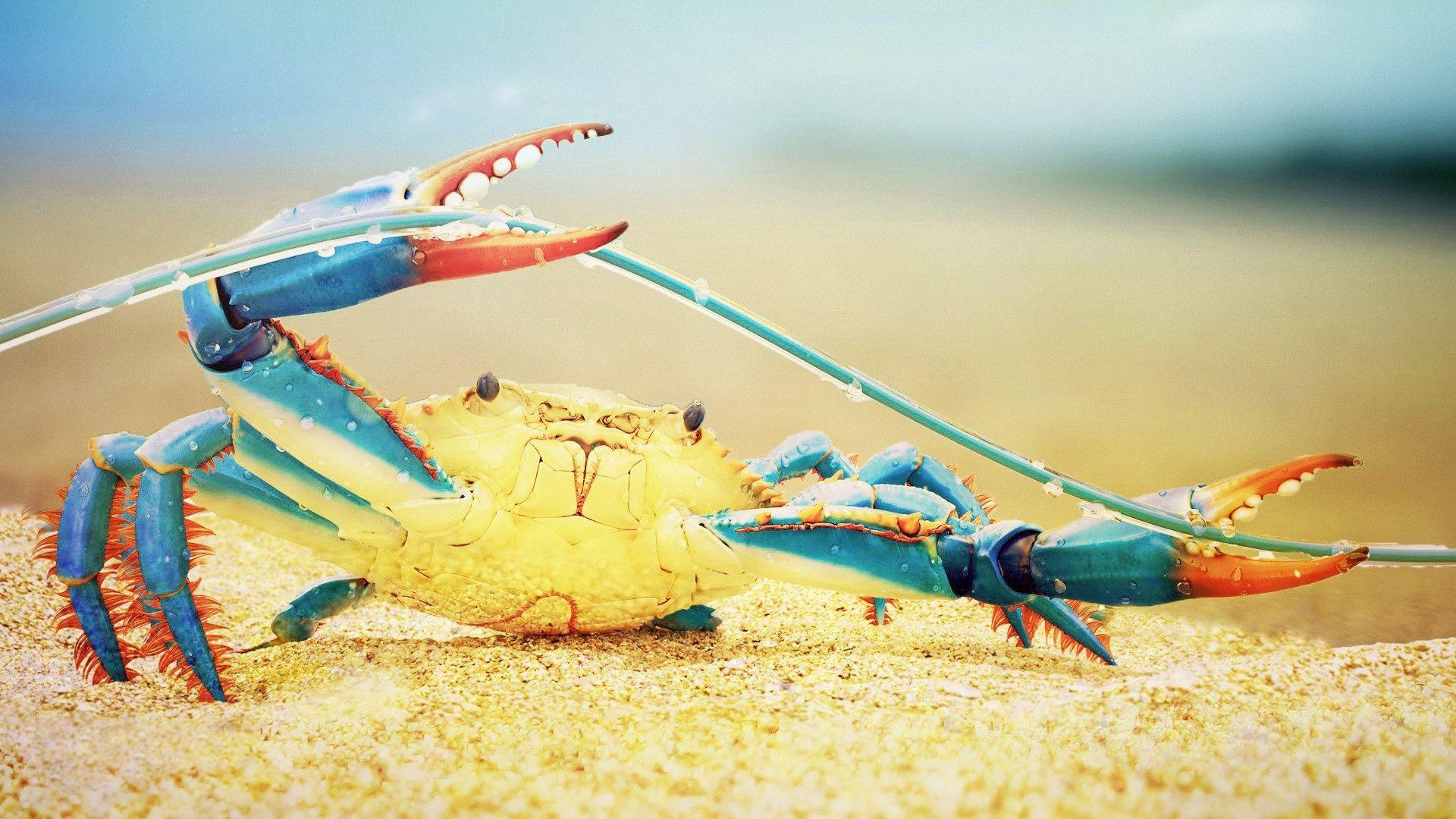 Crab HD 1080 wallpaper