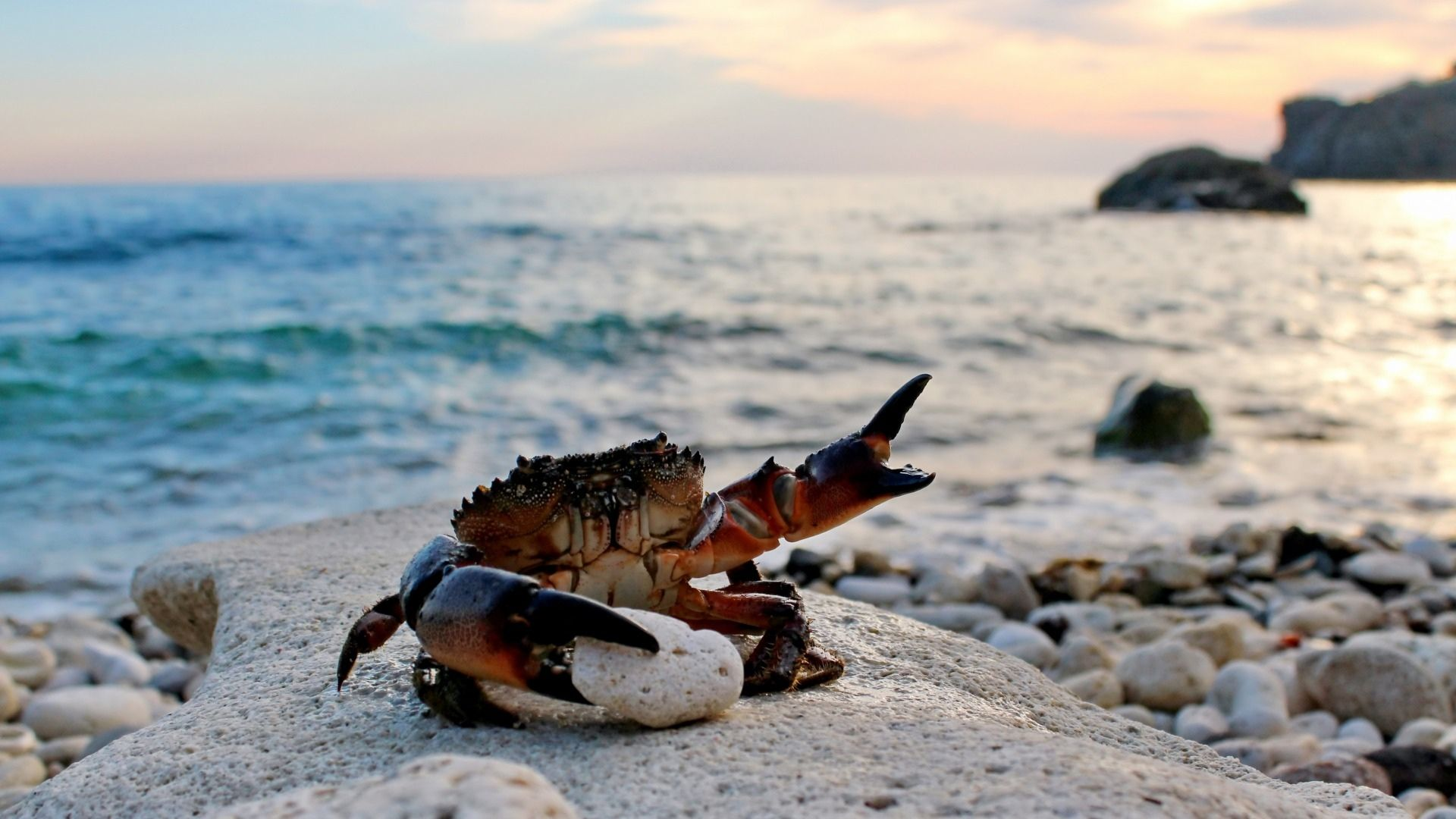 Crab best Wallpaper