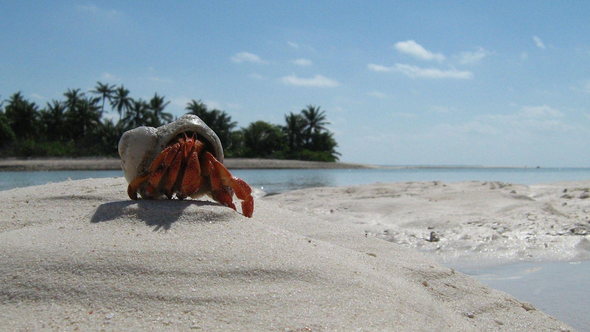 Crab download wallpaper image