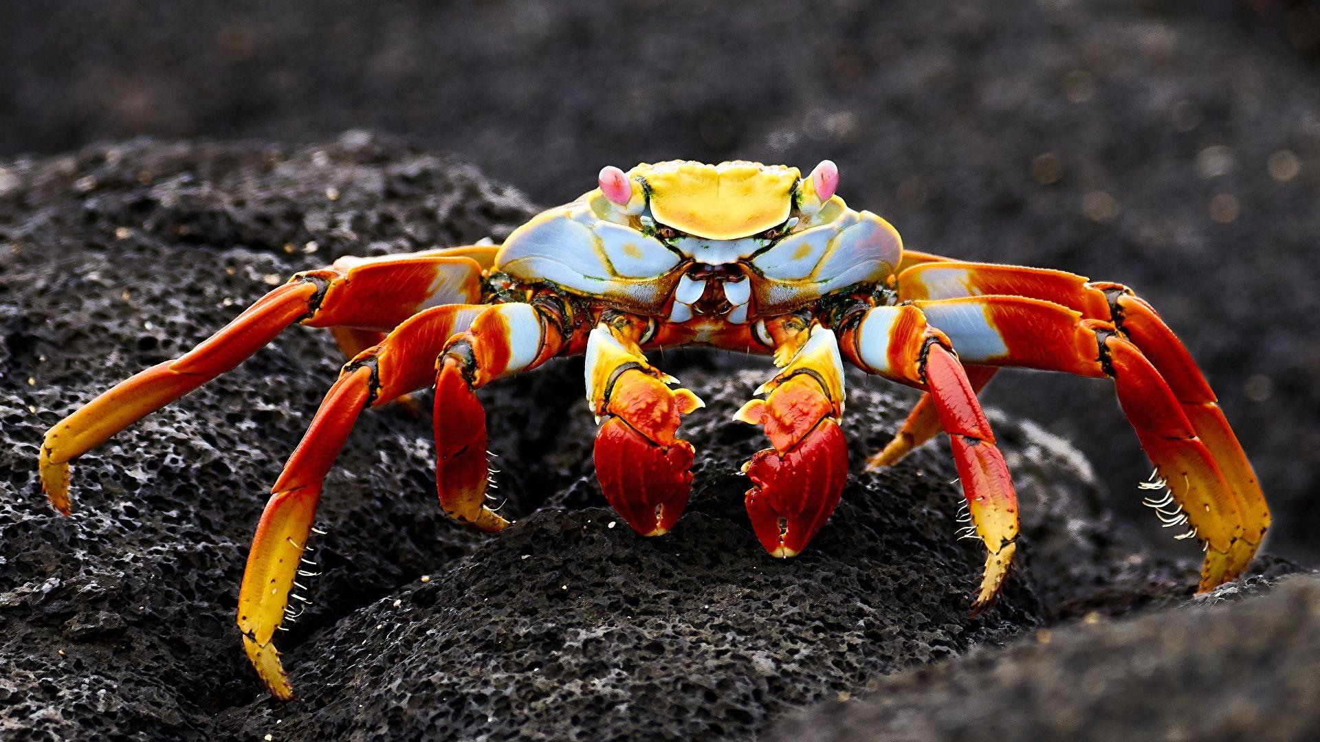 Crab High Definition