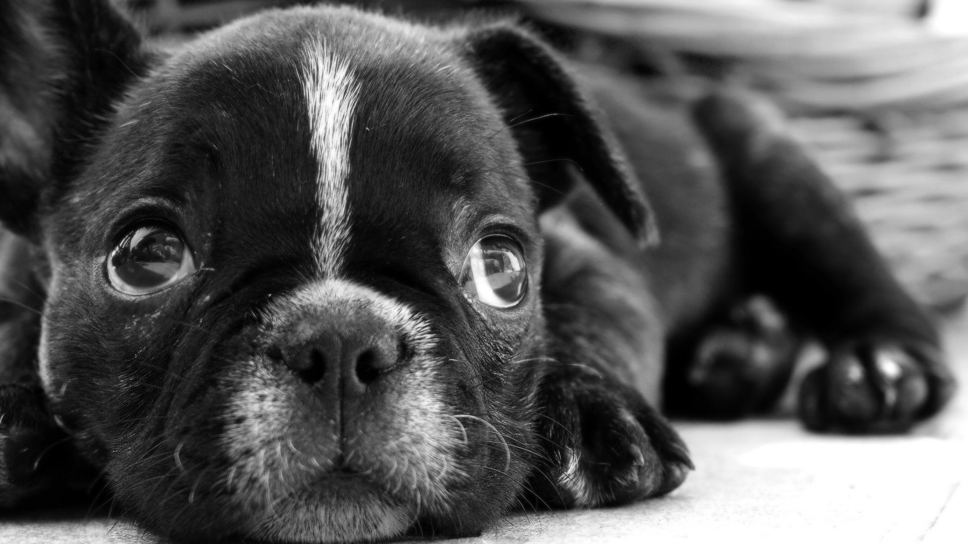 Cute Black And White wallpaper photo hd