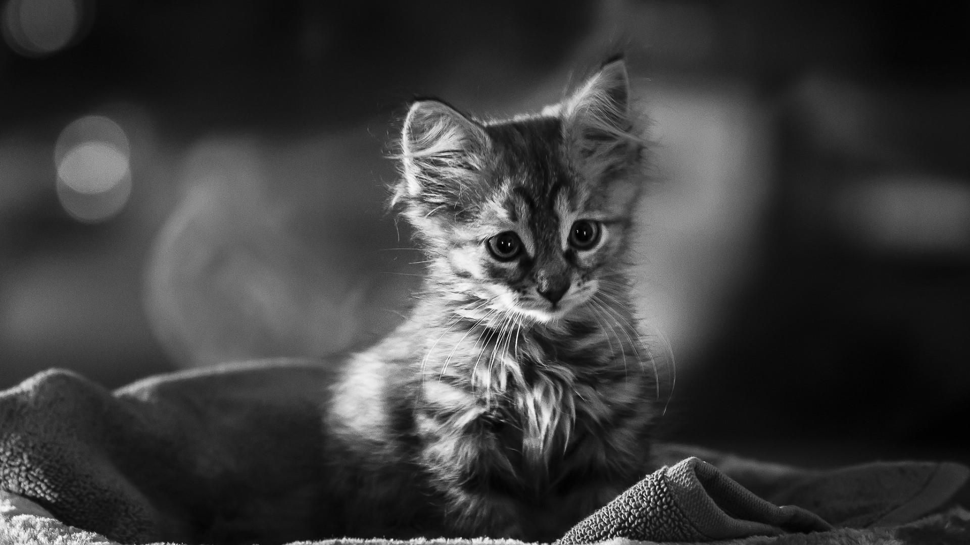 Cute Black And White hd wallpaper for laptop