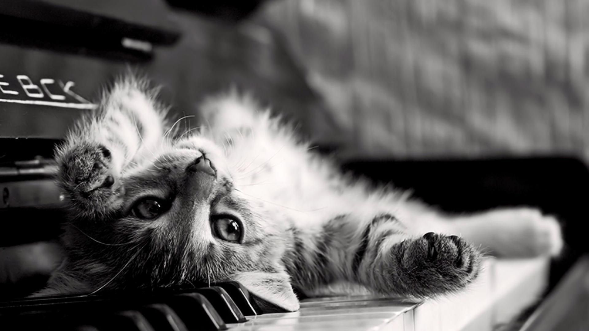 Cute Black And White HD 1080 wallpaper