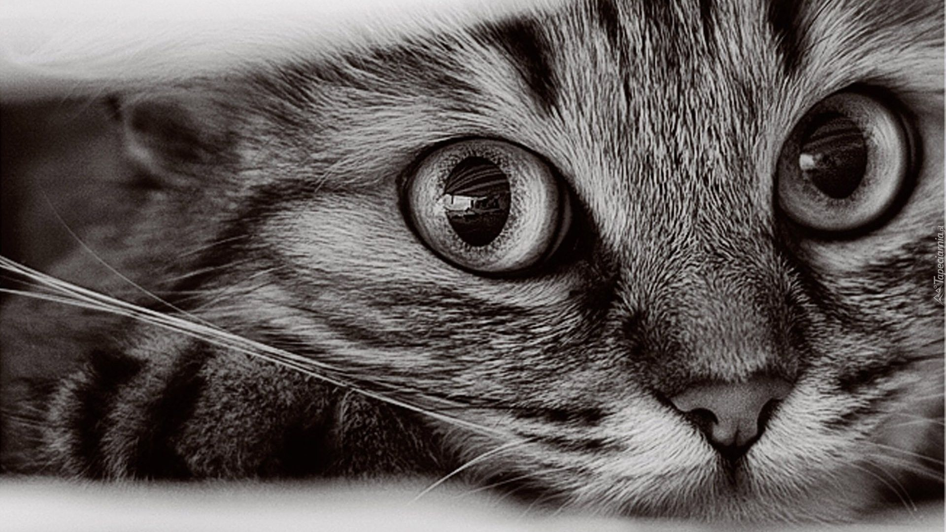 Cute Black And White Good Wallpaper