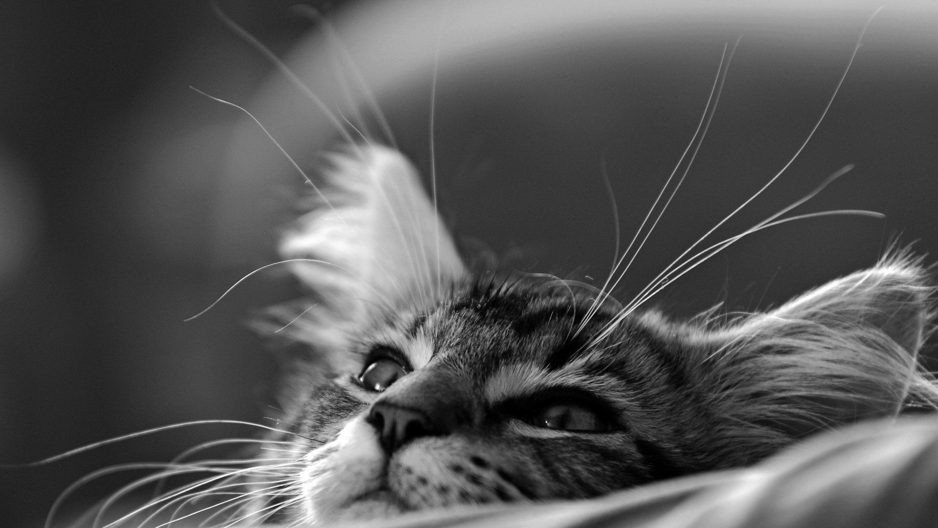 Cute Black And White Cool Wallpaper