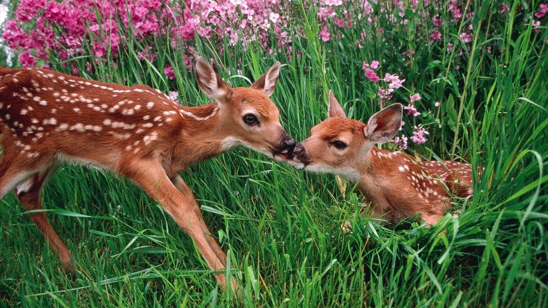 Deer High Quality