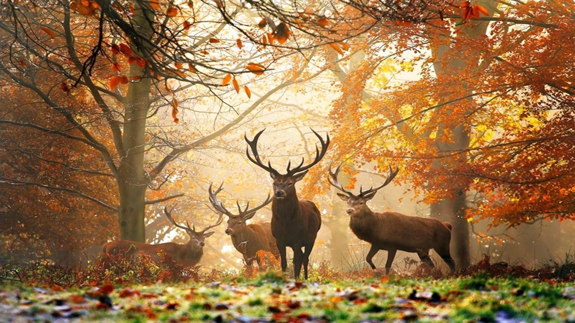 Deer Free Wallpaper and Background