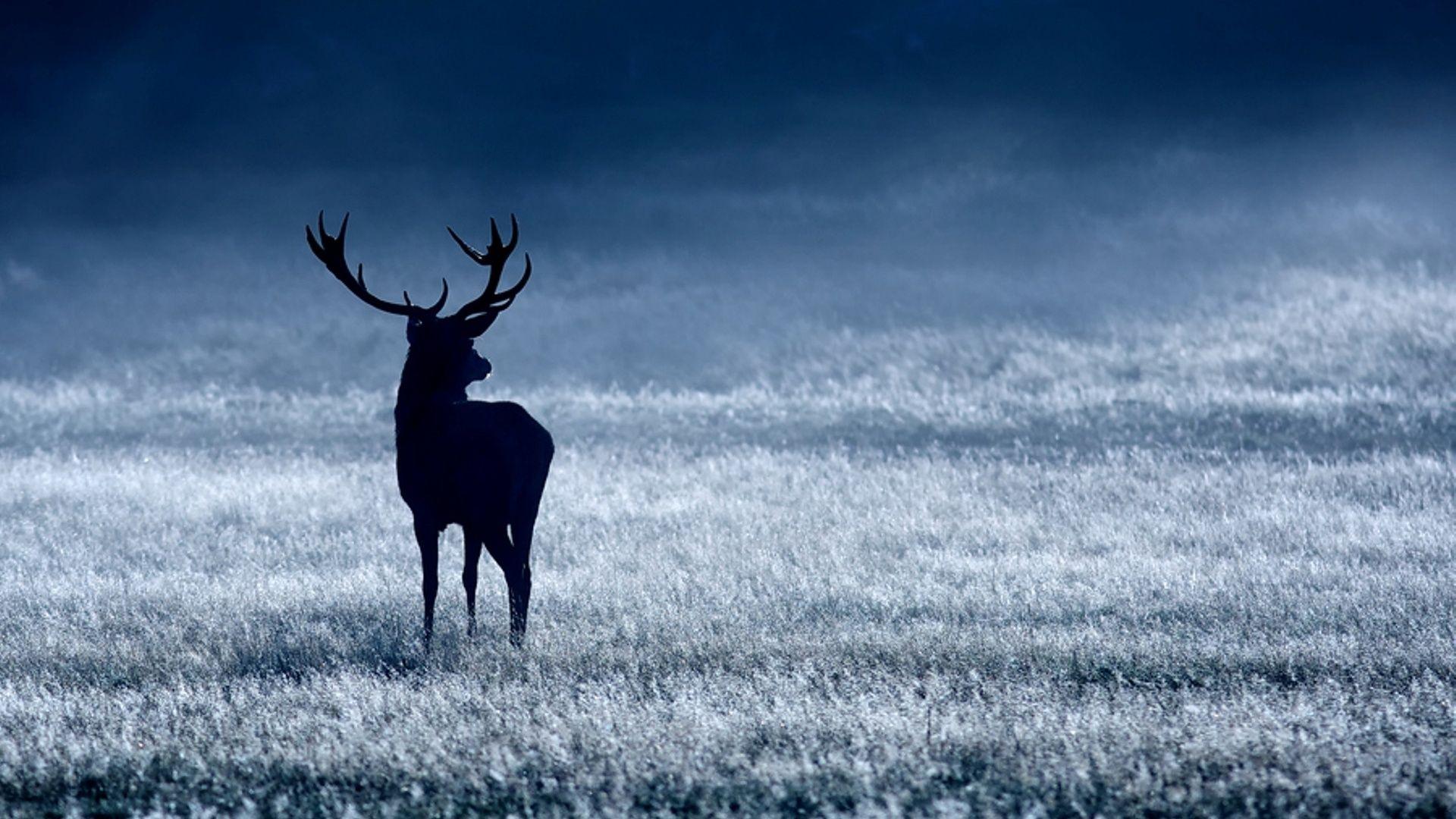 Deer beautiful wallpaper