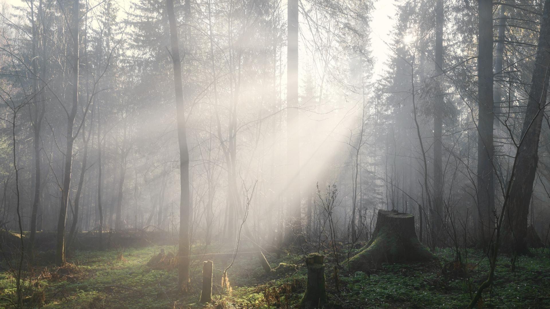 Fog download wallpaper image