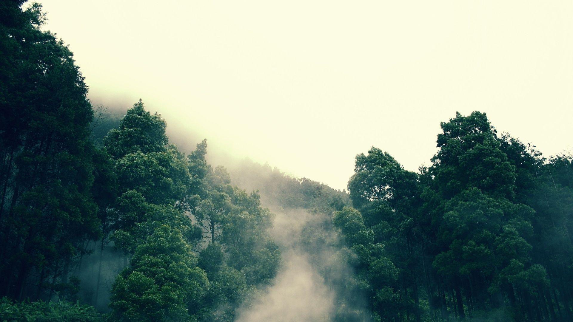 Fog Download Wallpaper