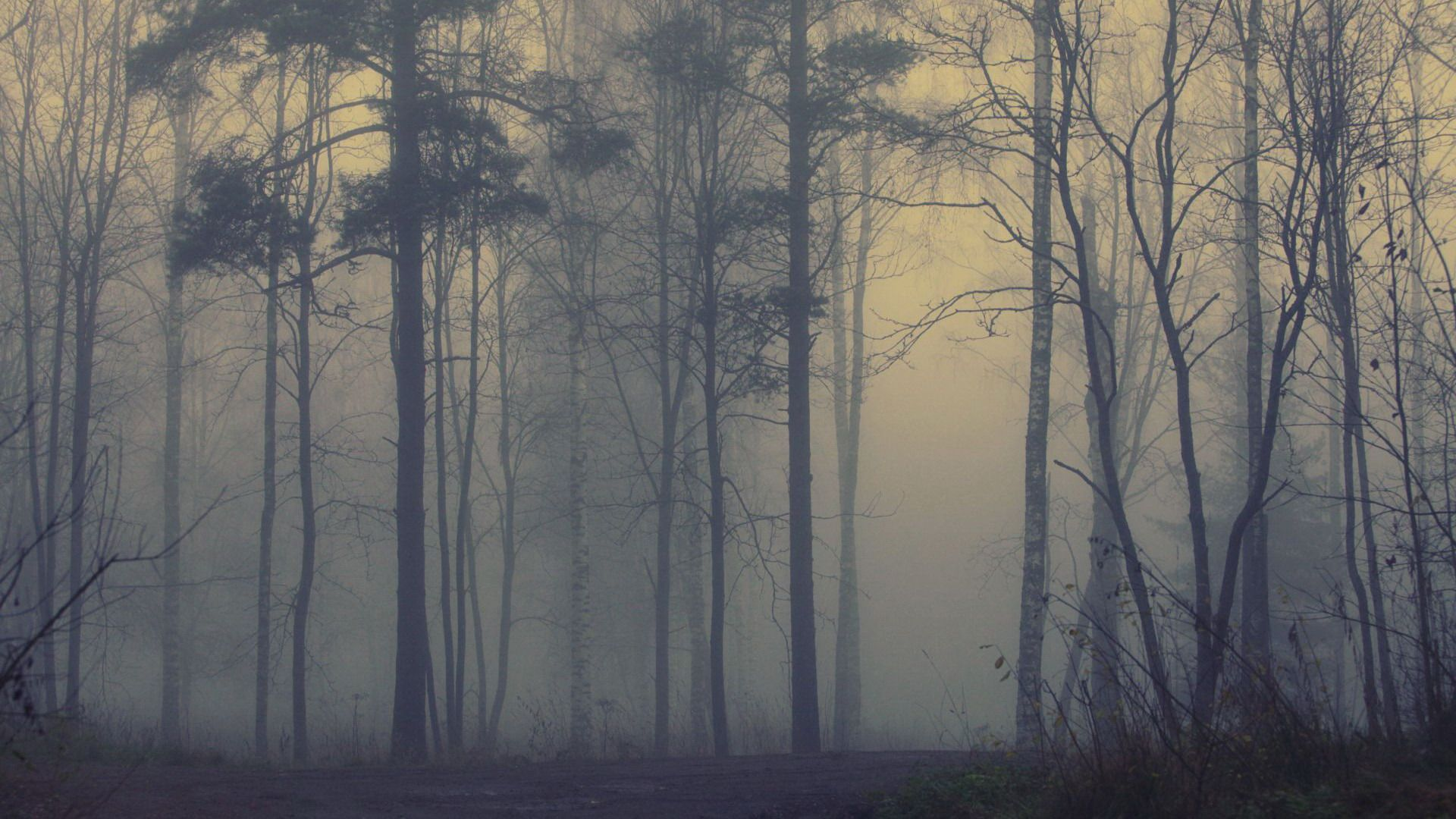 Fog download free wallpaper image search