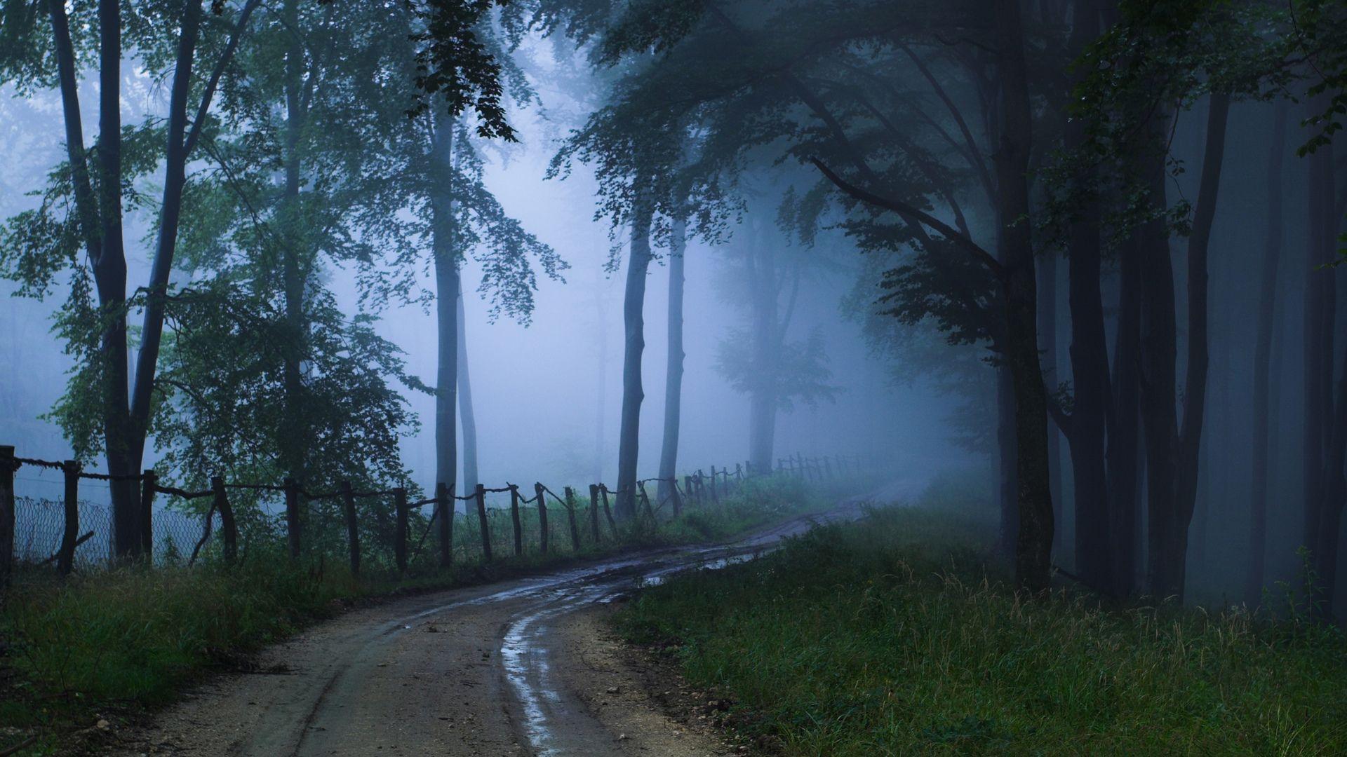 Fog wallpaper image hd