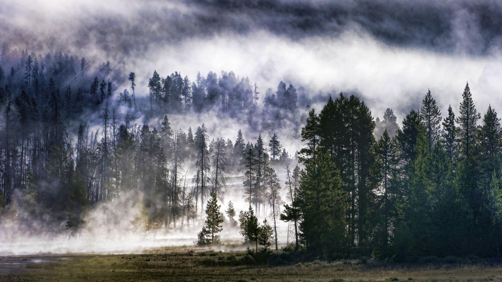 Fog PC Wallpaper