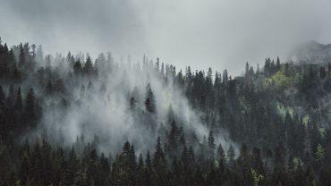 Foggy Forest High Quality