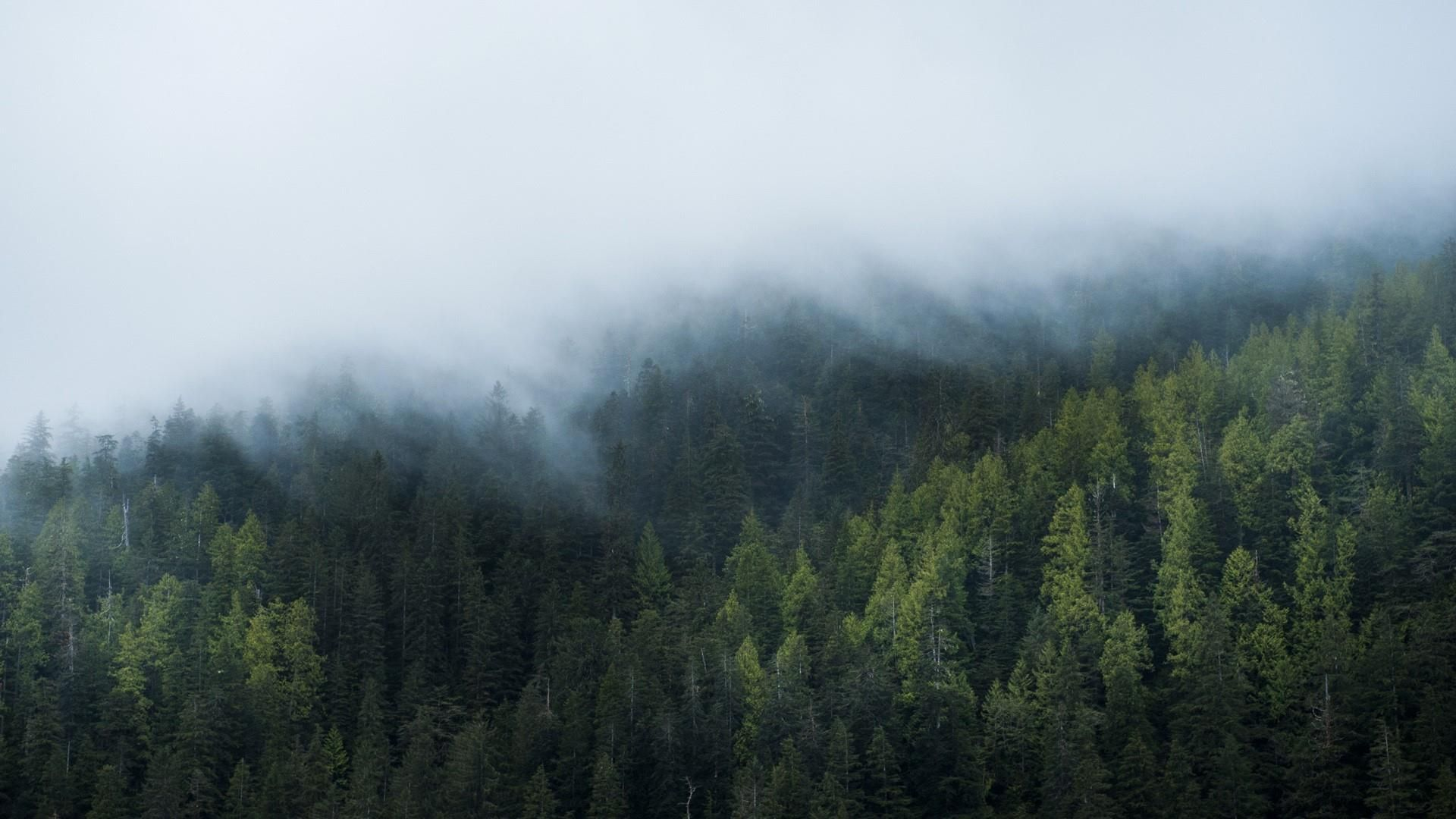 Foggy Forest download wallpaper image