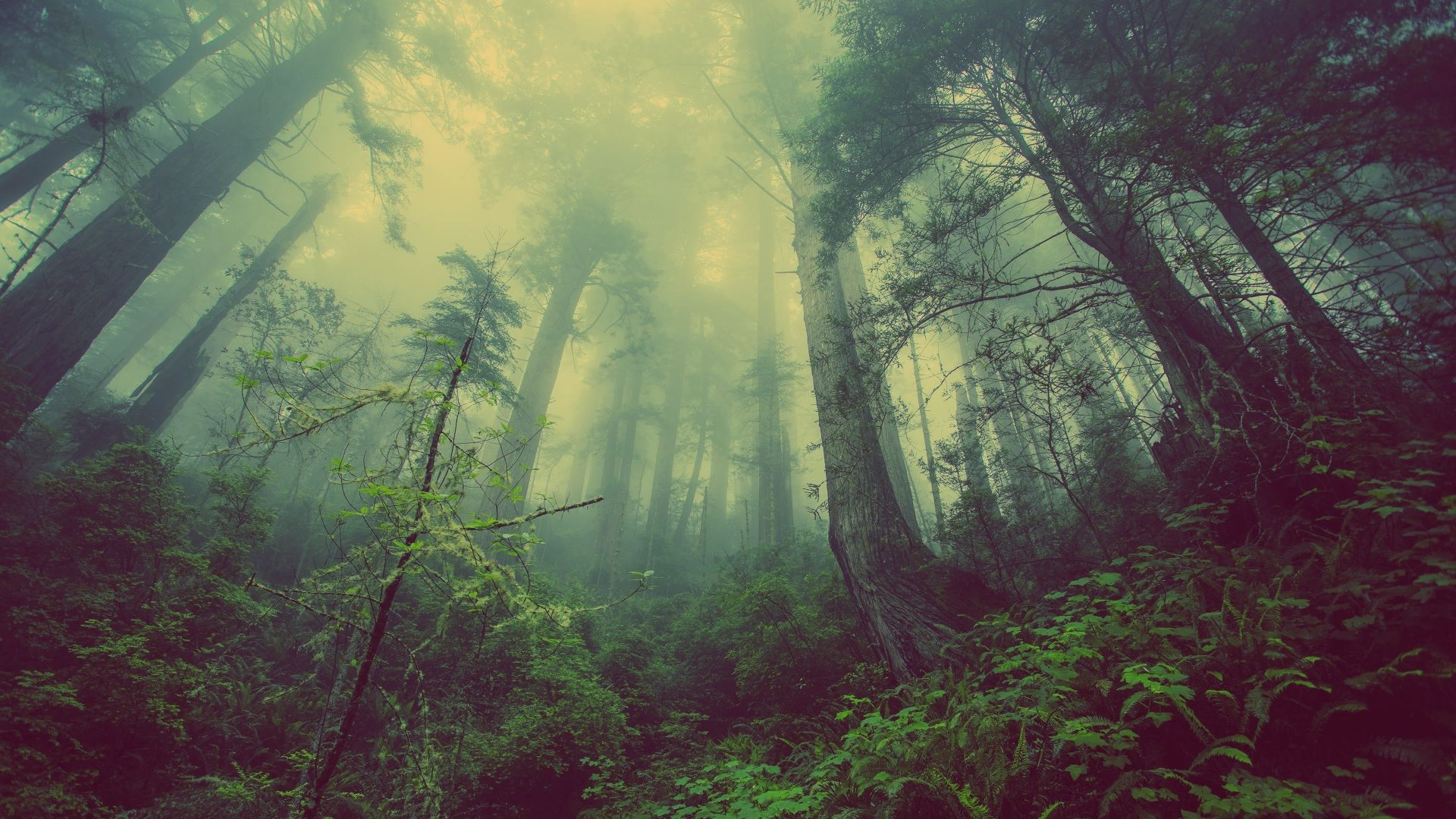 Foggy Forest Wallpaper Picture