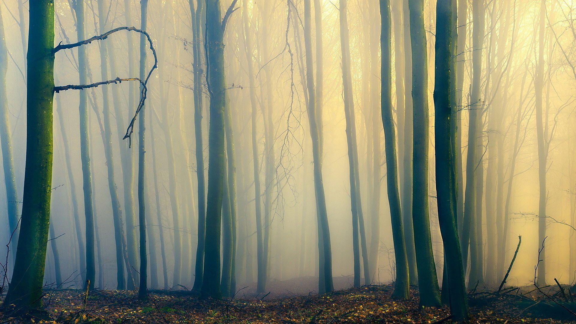 Foggy Forest HD Desktop Wallpaper