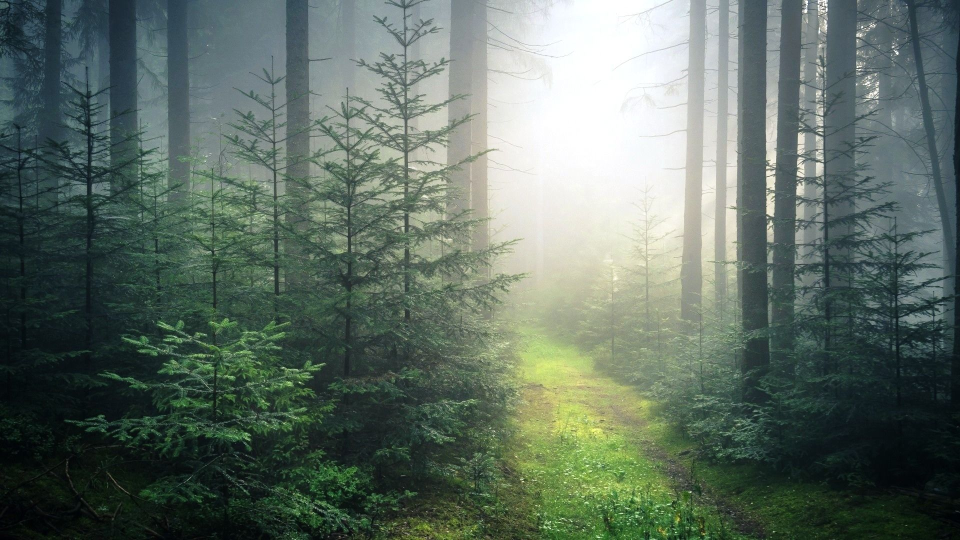 Foggy Forest wallpaper image hd