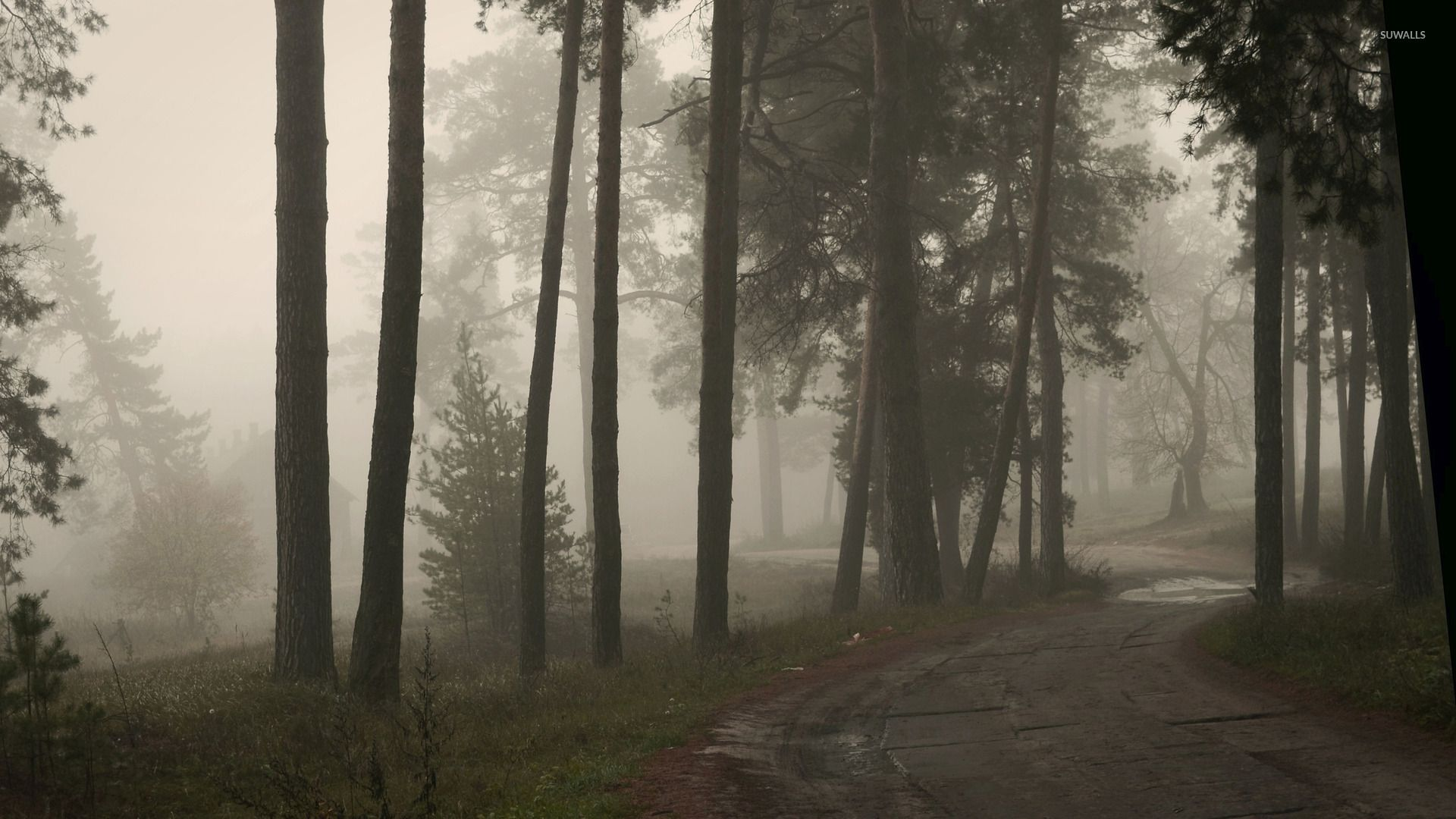 Foggy Forest Free Wallpaper and Background